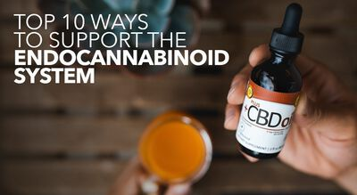 Top 10 Ways to Support the Endocannabinoid System