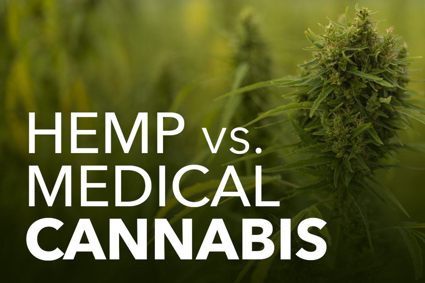 Hemp vs. Weed: What Is the Difference Between Hemp & Medical Cannabis?