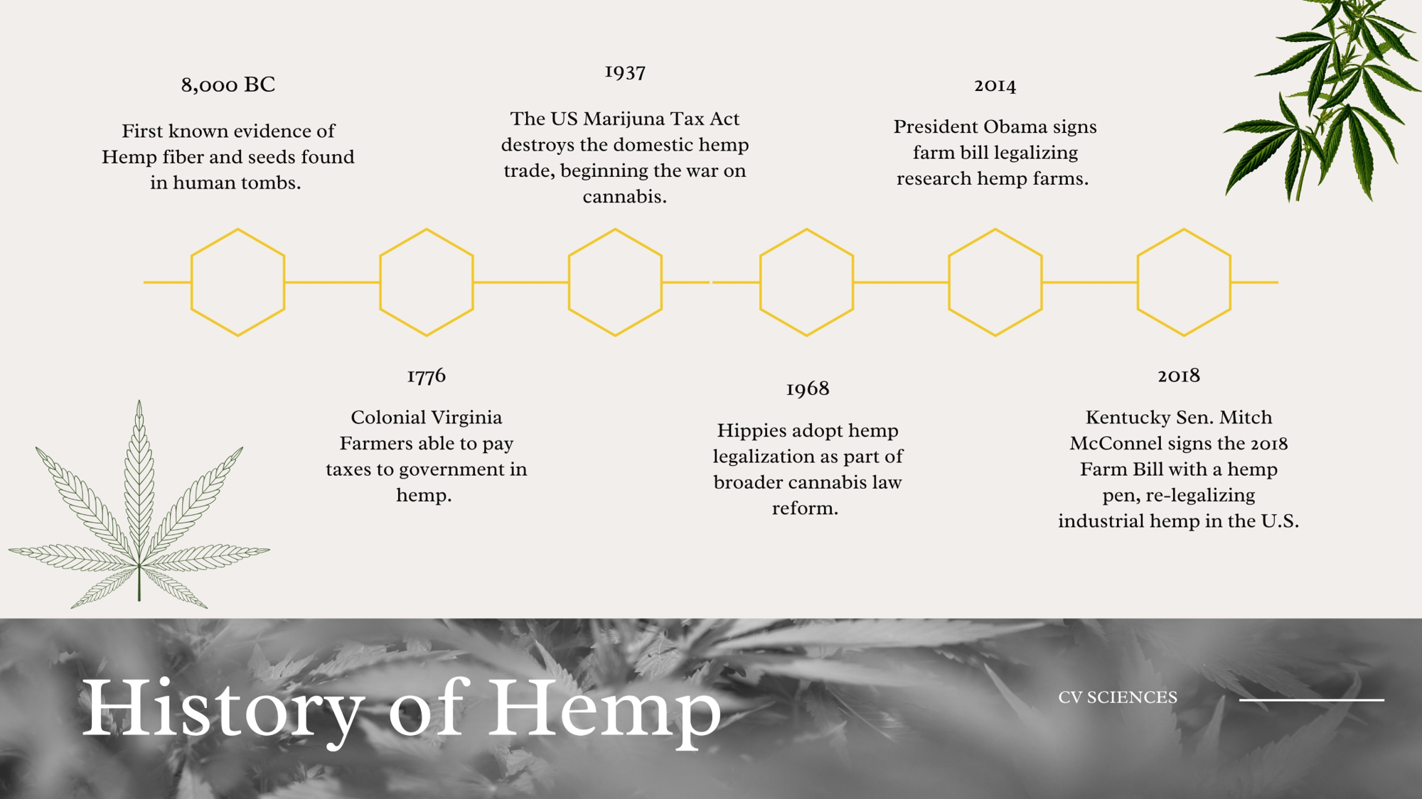 history of hemp timeline