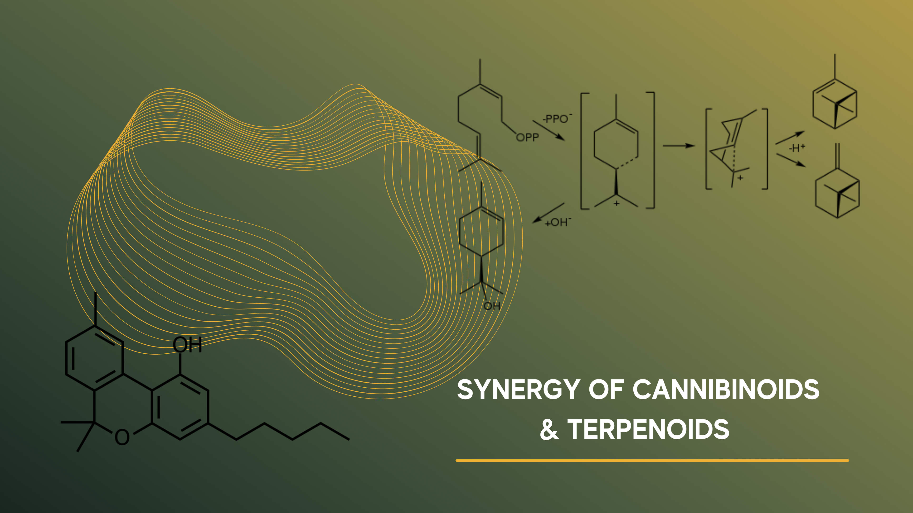 Graphic Synergy of cannabinoids and terpenoids science